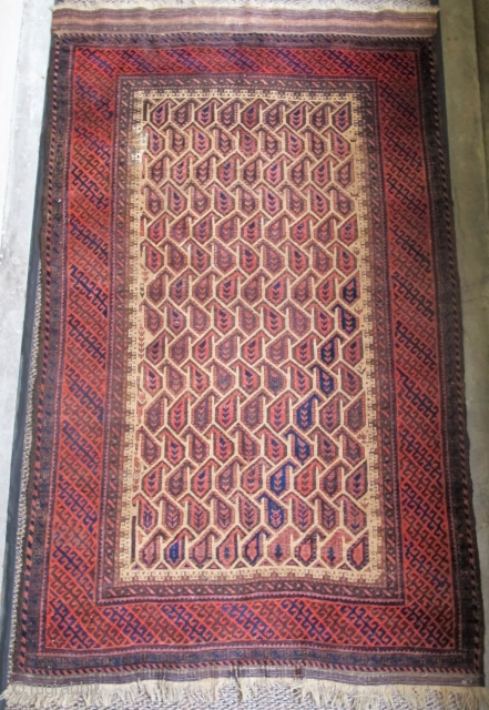 Camel ground Baluch rug with geometricized botteh and borders. 