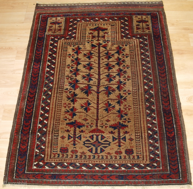 Antique Baluch camel ground prayer rug a design that is typical of the Sarakhs Baluch of Khorasan. 