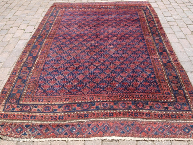 Antique Timuri Baluch main carpet with all over shrub design. 2nd half 19th century. Size: 10ft 7in x 6ft 6in (322 x 198cm).