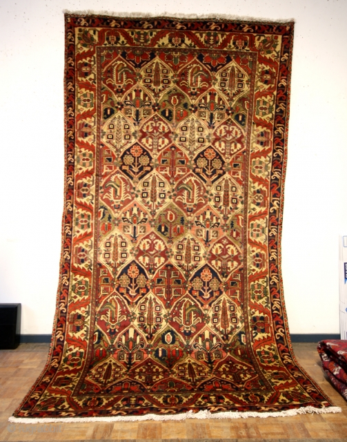 Bachtiar, mid 50-ies, perfect condition, clean, 300 x 160 Cms.  Lots of colors well blended in.  ON AUCTION ON CATAWIKI link: https://veiling.catawiki.nl/kavels/30089199-bachtiar-tapijt-300-cm-160-cm?previous=favorites