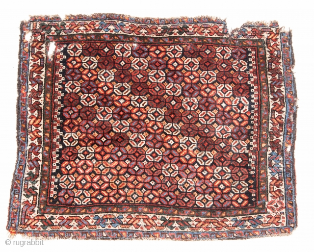 South Persian Bagface 51 x 63 cm / 20 x 24 inches