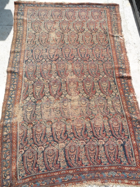 antique senneh rug 