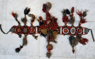 Persian tribal horse  trapping (possibly neck band). Wool tufts, shells and leather. In need of a good bath. 9 x 85 cm. One sulfuric blue detected, otherwise good colours.