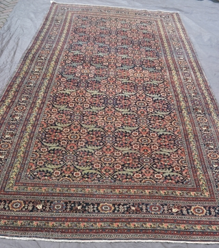 Bijar Kelleh carpet, elegant allover design with a beautiful range of muted natural dyes.