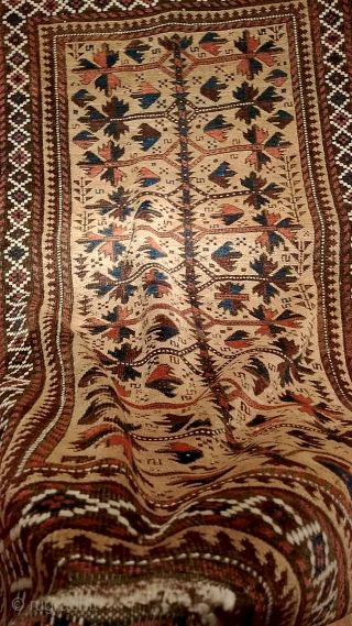 "Antique Baluch rug.  3"" (96cm) x 5' (150cm).  In excellent pile, good colors, glowing camel field, glossy wool, minor corrosion. Striking graphic."