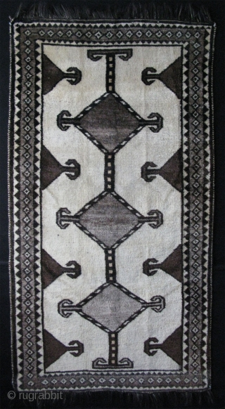 """Qashqai rug with all natural color undyed wool. Ivory color has a dragon / serpent design when the light is low on it. Still has good pile. Circa 1920s. Size: 41"""" x  ..."""