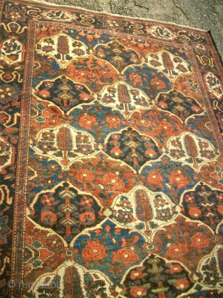 antique Bachtiari. Size: 146 x 191 cm. Organic Colors. Fine knotting. Thin pile.