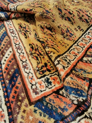 Lush Camel Field Kurd Rug with thick pile. Clcik to see more photos and details: https://wovensouls.com/products/887-antique-camel-field-kurdish-rug?ls=en Can be shipped out immediately until Aug 9th.