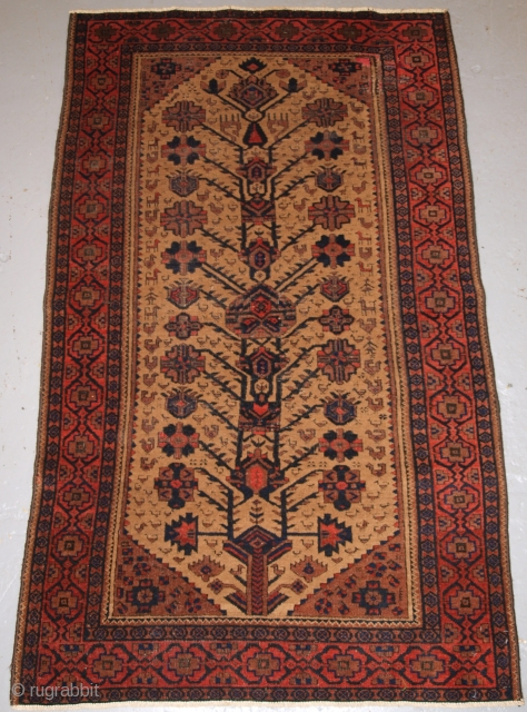 Antique Baluch rug, these Baluch rugs are known as Arab Baluch from the Ferdows region.