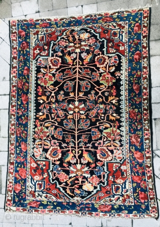 Bakhtiyari rug wool on wool 1880 circa all good colors in perfect condition•••size200x150cm