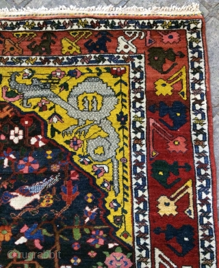 Armeni bafd all are colors natural dyes full pile size 230x150cm
